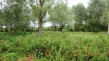 The Ver, Redbournbury