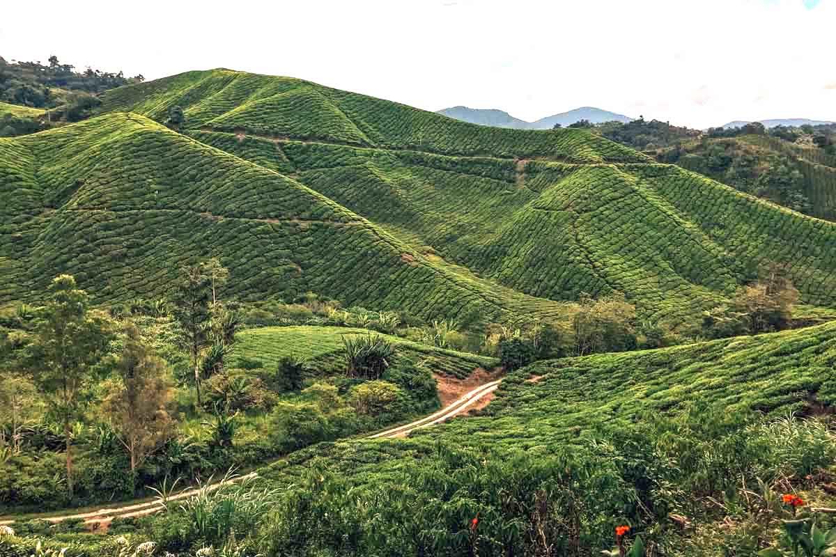 Cameron-Highlands-Malaysia