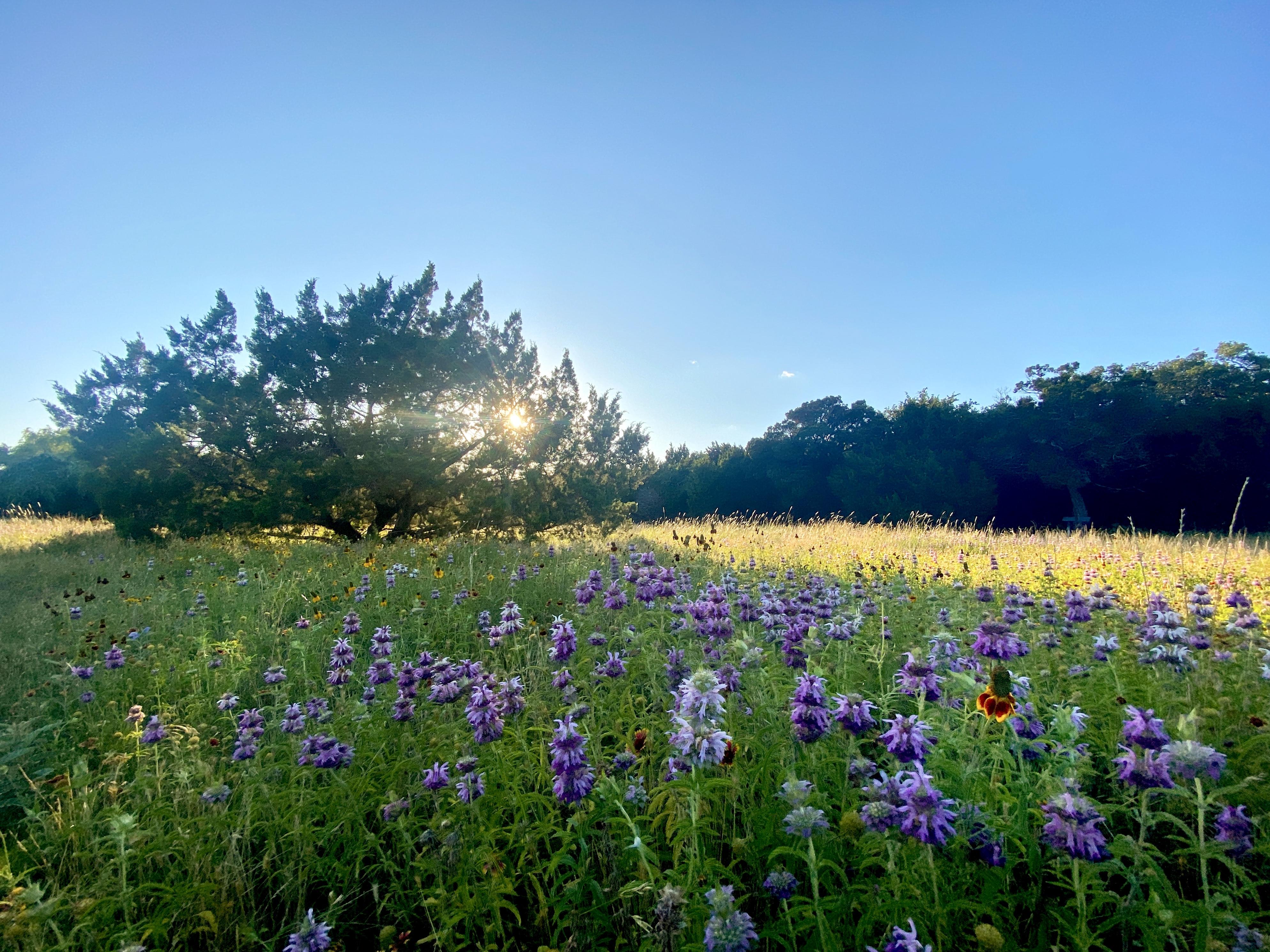 texas, sun shining, flowers blooming, birds singing