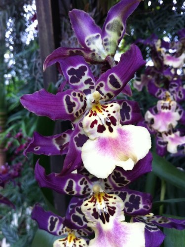 Orchid Blooms