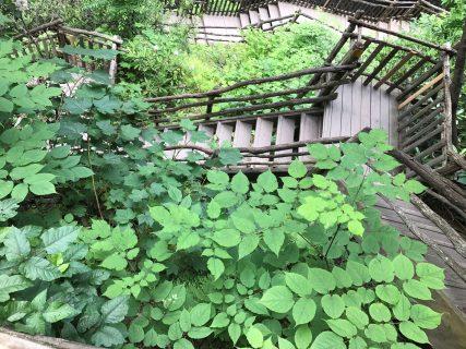 Nature Maze, Bushkill Falls