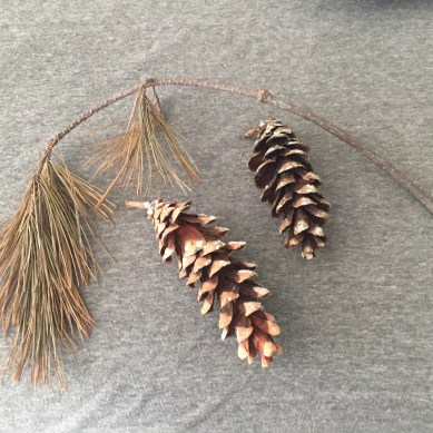2 pinecones and a pine tree branch