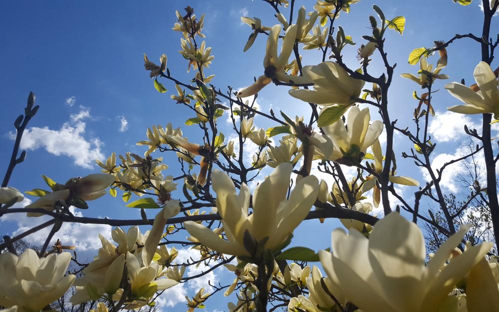photos of flowers