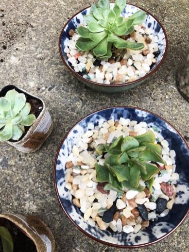 Sibio, Plants