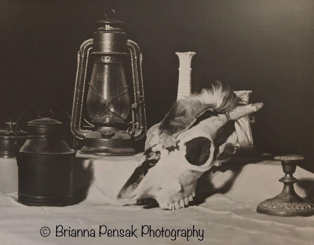 Brianna Pensak - Skull Still LIfe