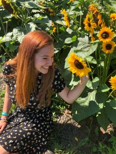 Ivy in a sunflower field