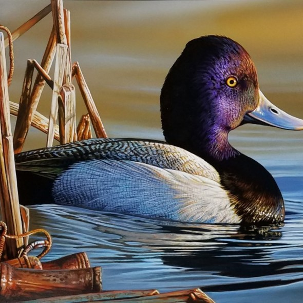 Federal Duck Stamp 1st Place 2020