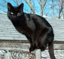 ISIS_Possibly the first house cat to build an Islamic state
