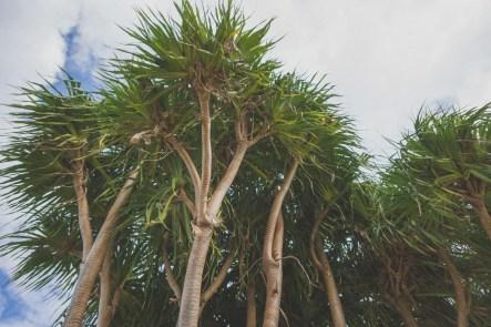 12-11-28-oahu-hawaii-00055.jpg