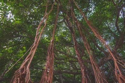 12-11-29-oahu-hawaii-00155.jpg