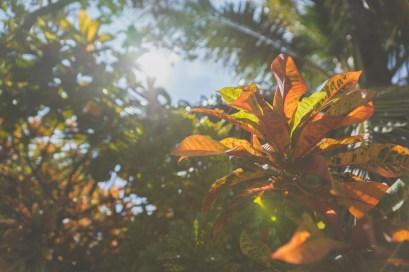 12-12-01-oahu-hawaii-00285.jpg