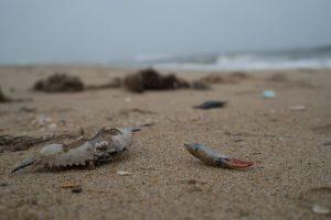 150320-jjs-a1-virginia-beach-virginia-04598