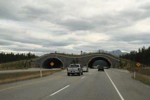 A wildlife crossing
