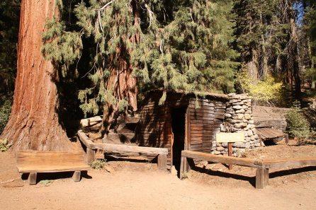 A cabin inside a sequoia