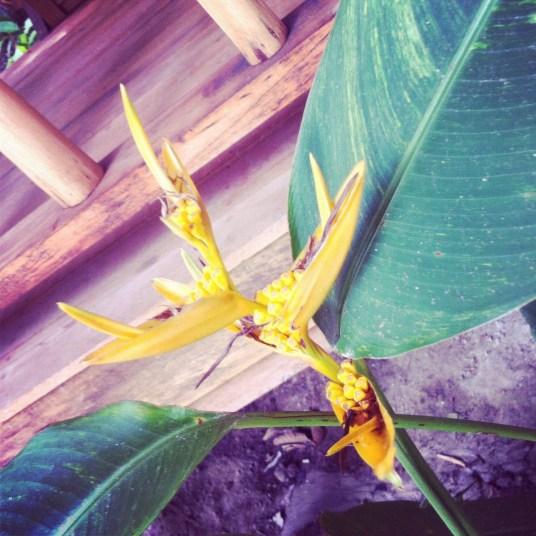 kwiaty w ogrodzie Muka