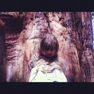 duże drzewo