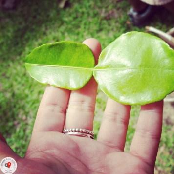 tajskie zioła