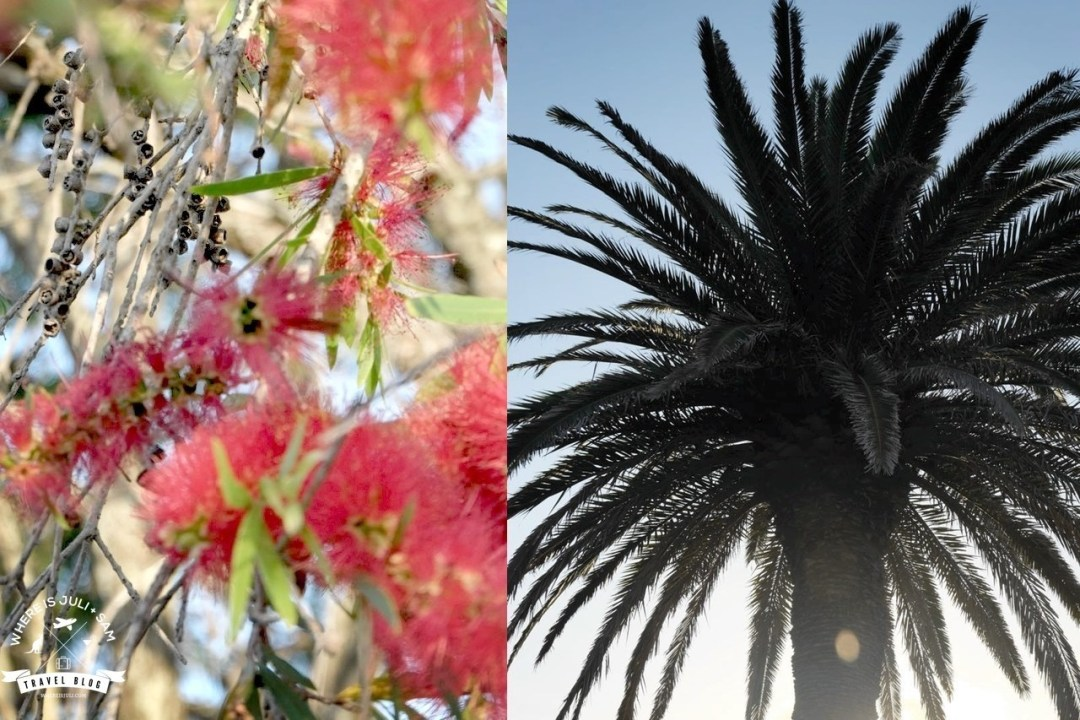 Palm Tree and Bottle Brush