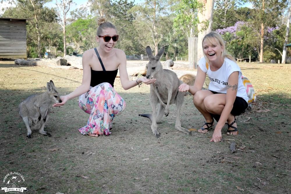 Aneta, Julia i kangury