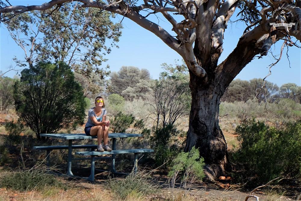 w cieniu drzewa na Outbacku