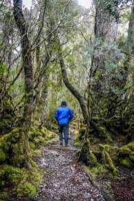Tasmania- spacer w lesie