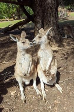 Wasza Australia Pawel-2
