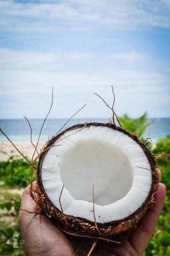 Nanuku Island kokos