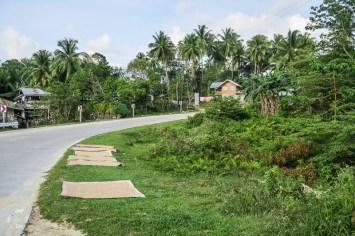 Wyspa-Bohol-ryz-przy-drodze