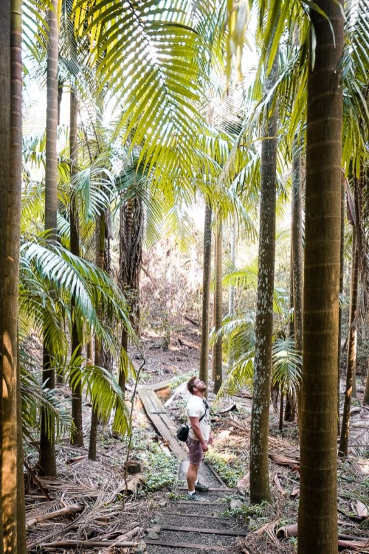 The-Palms-Queensland