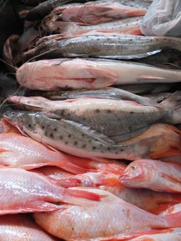 Morrilla pescado en mercado