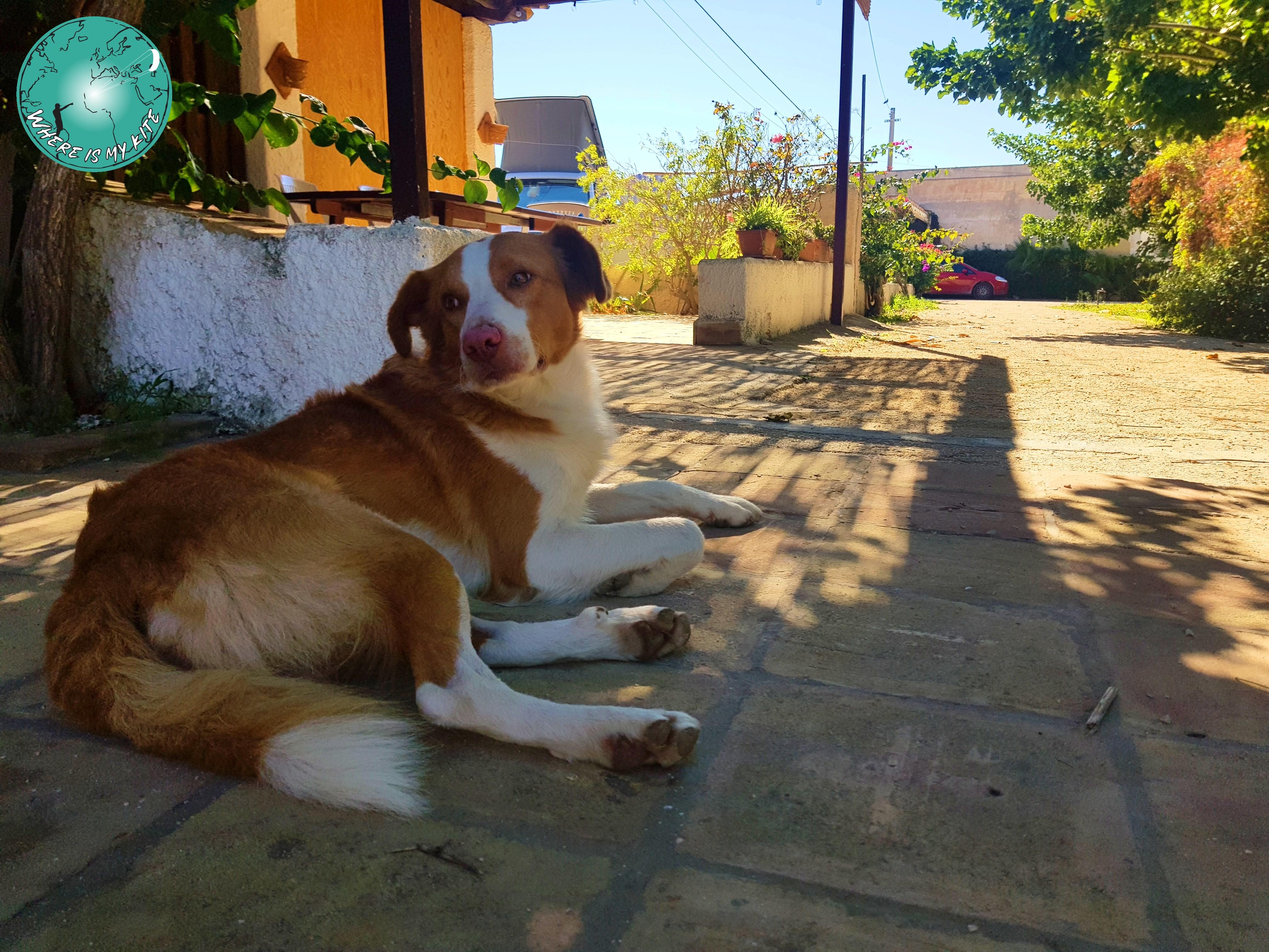 Comme un chien à la maison chez Mamma Colette en Sicile, Marsala
