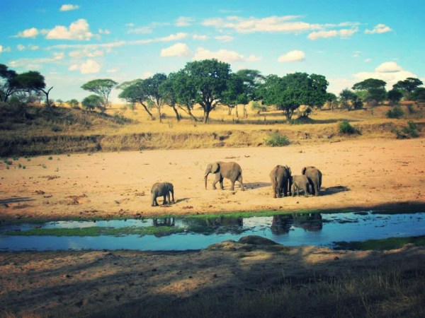 Adventures in Tanzania - Safari Blues (Part 1)