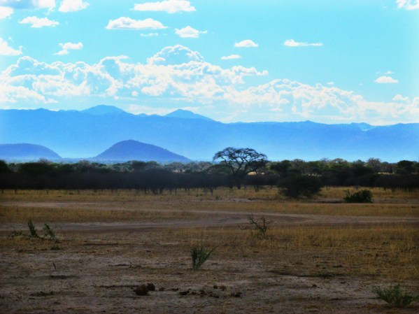 Photo Diary - Tales from The Tarangire
