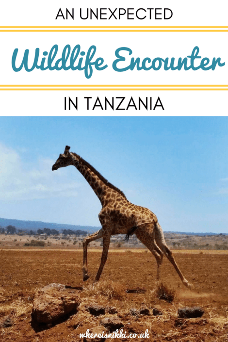 An Unexpected Wildlife Encounter in Tanzania