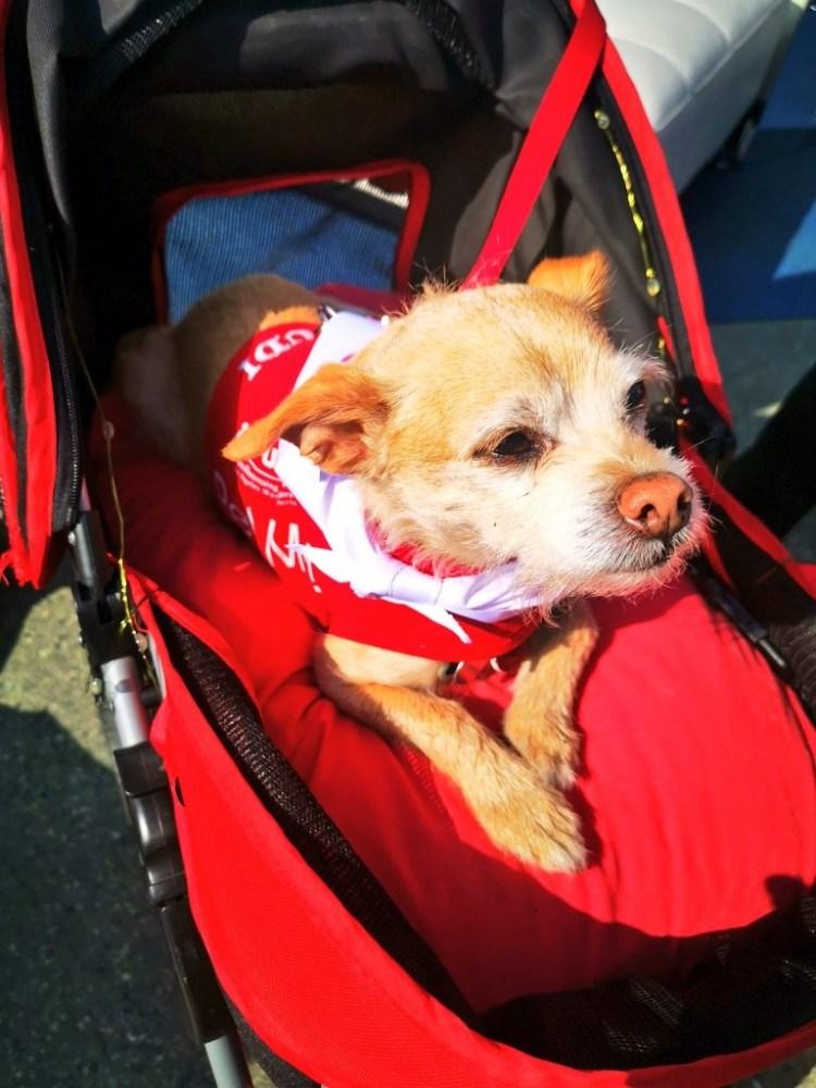 PUP airport dog Tara Povey 5 days in LA Los Angeles itinerary