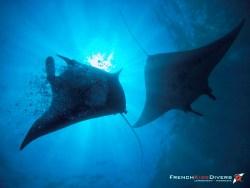 Nusa Penida : Où nager avec les Raies Manta à Bali