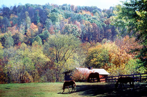 Horses grazing in a pasture along a fence and surrounded by changing fall colors in Kentucky along the Wilderness Road Heritage Highway.