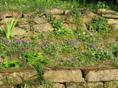 Violets and wild strawberries
