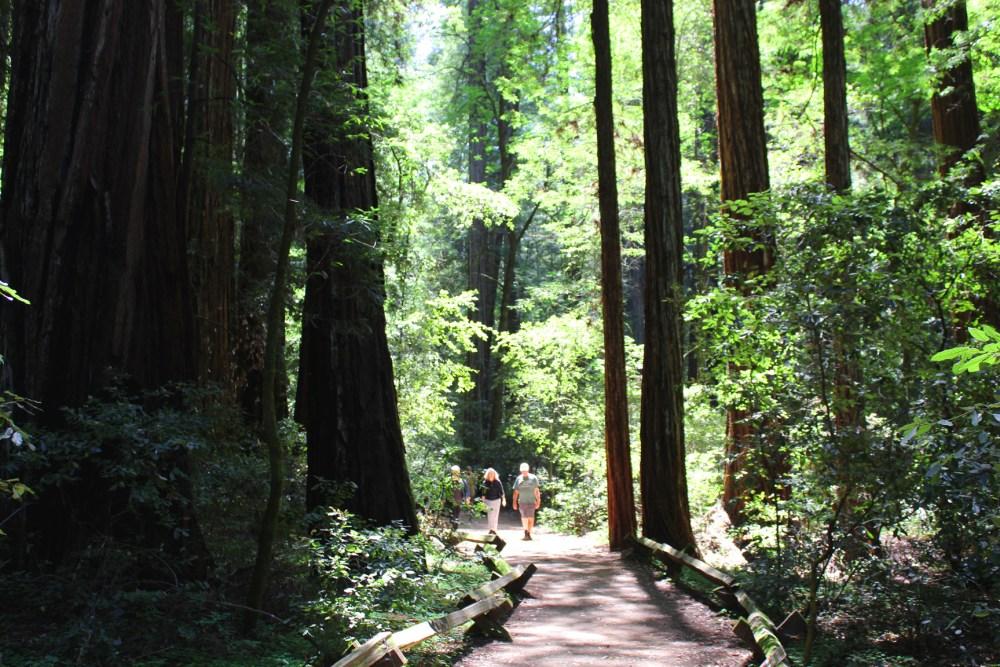 Armstrong Redwoods, Santa Rosa California. Photo: Mary Charlebois