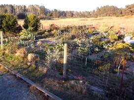 Caspar Community Garden