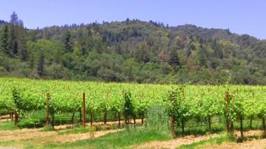 vineyards-01