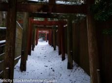 The torii gates up to my favourite shrine.