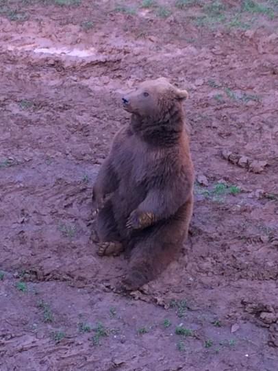Like a little teddy bear, SO CUTE