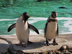 penguins-51