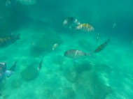 Super clear water, tons of little fish.