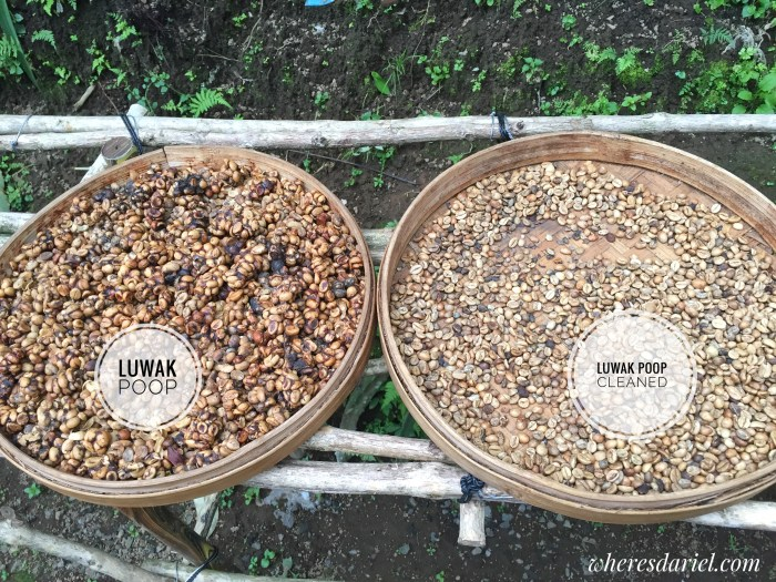 Things to do in Bali - kopi luwak