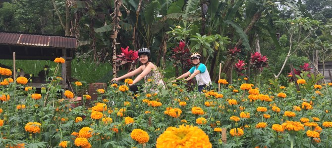Things to do in Bali – Countryside Cycling Tour
