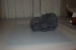 grey-bunny2