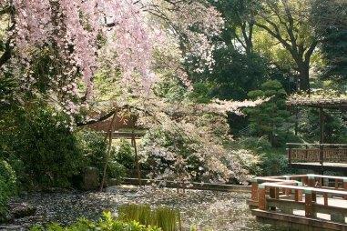 Harajuku Pond