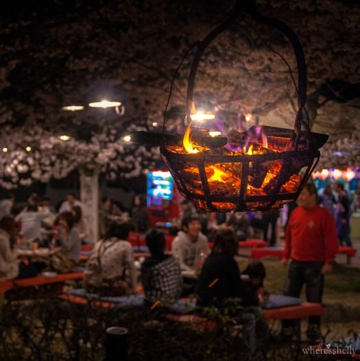 japan-cherry-blossoms-sakura-3105